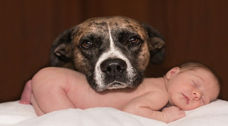 introducing a dog to a baby